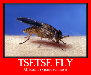 tsetse fly-African trypanosomiasis